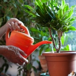 green thumb, neighborscape, neighbour, landscaping, gardening, spring