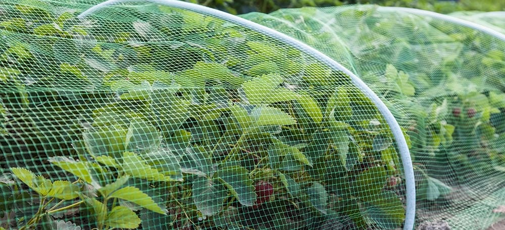 Netting Protecting Vegetables